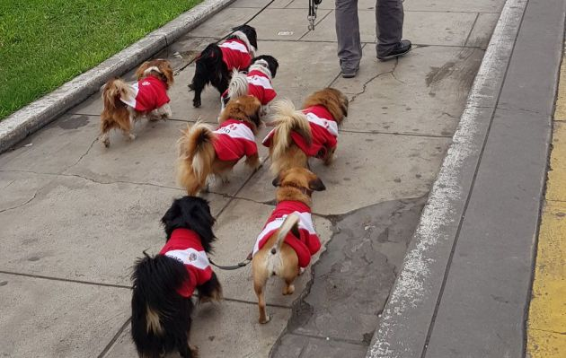 Perú vs. Brasil: perritos también alientan a la selección peruana