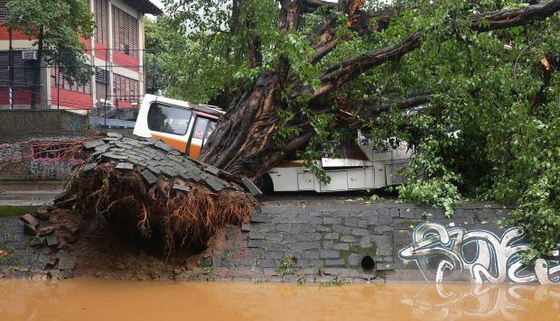 Caimanes huyen de un criadero en una favela de Rio de Janeiro por las lluvias