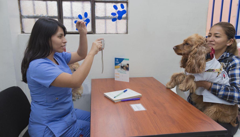Cercado de Lima: mascotas serán empadronadas de manera gratuita