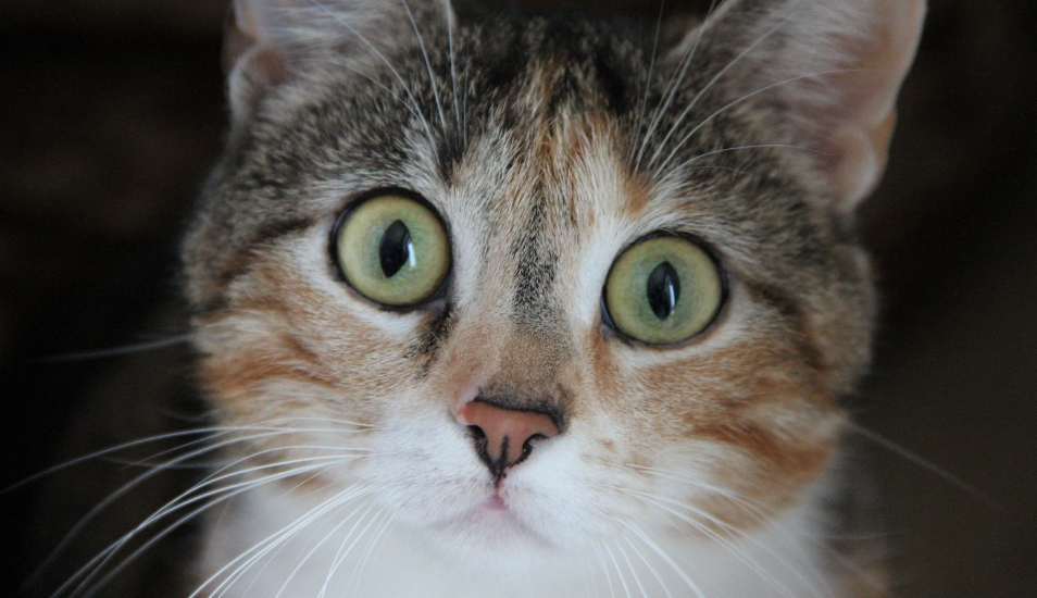 Facebook: el hilarante momento en que una gata es asustada por su cría