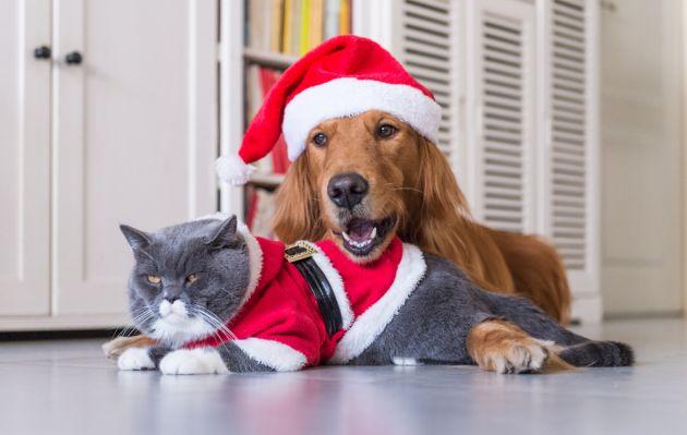 10 regalos perfectos para tu mascota por Navidad