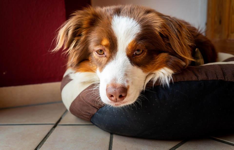 App peruana te permite tener bien cuidada a tu mascota
