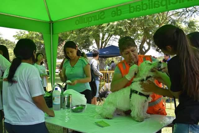 Surquillo vuelve a abrir veterinaria municipal con mega campaña gratuita este sábado | FOTOS