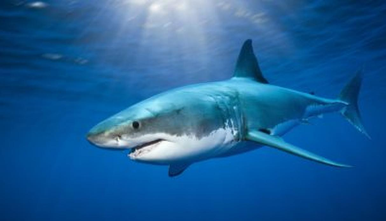 Actriz Porno Es Mordida Por Tiburon noticias sobre tiburón | noticias peru21 perÚ