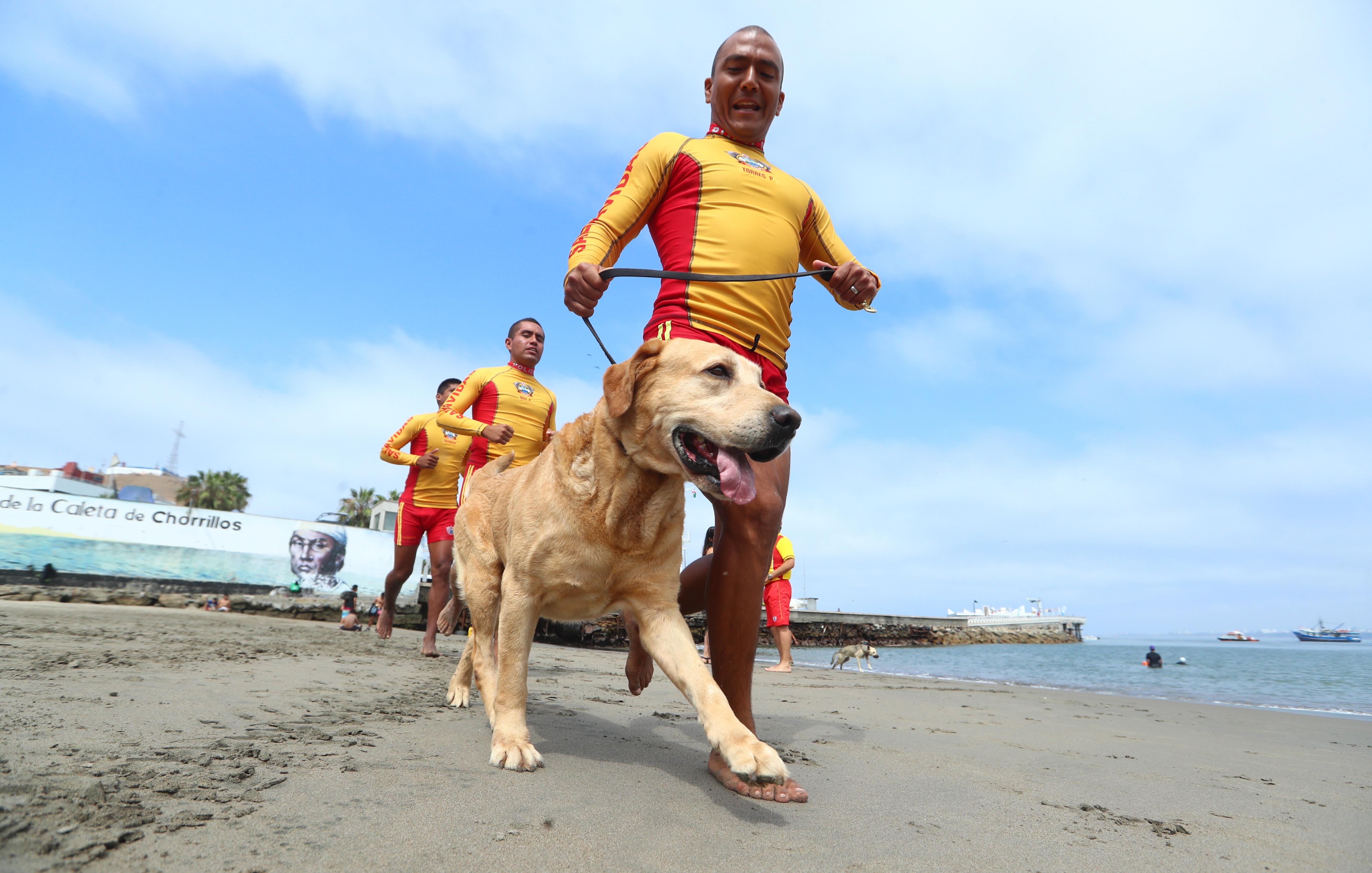 La historia de Gringo: un cachorro perdido que se convirtió en agente de PNP   FOTOS