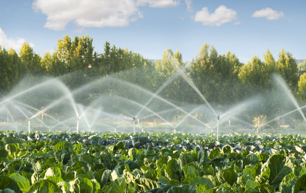Día Mundial del Agua: cómo reducir la pérdida de agua a una tercera parte en agricultura