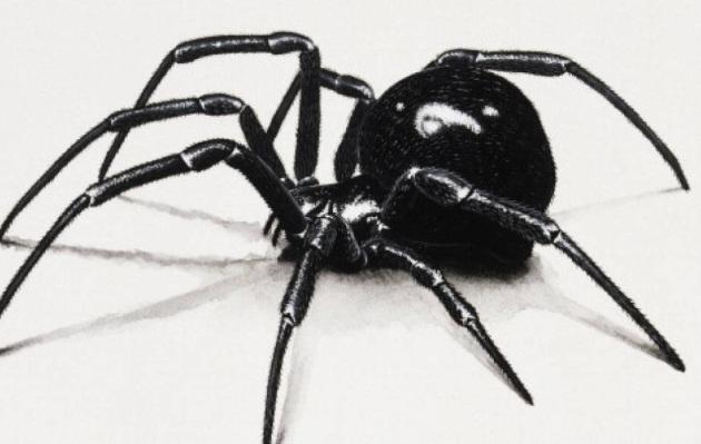 Descubren nueva y peligrosa especie de la araña viuda negra