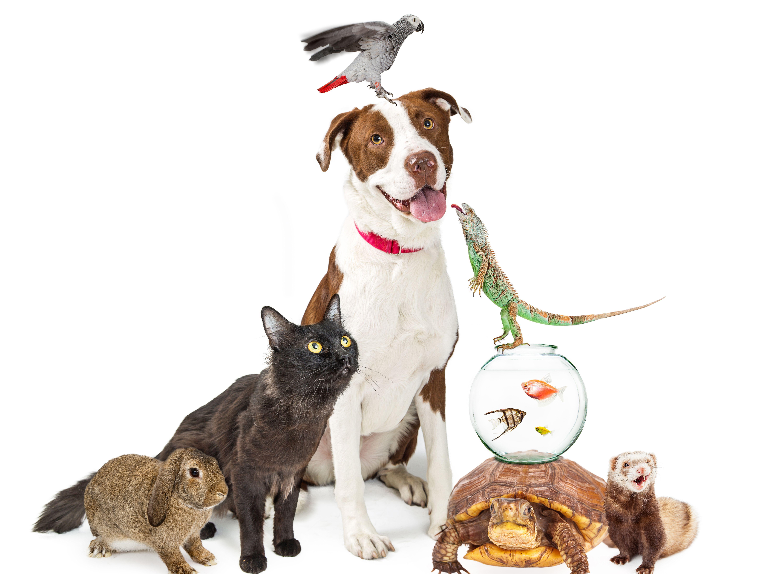Latin Pet: vuelve la exposición más grande de animales domésticos y exóticos