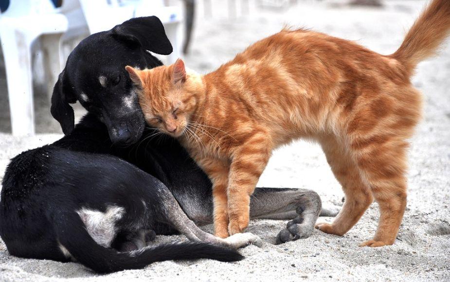 ¿Tu mascota está en peligro? Sálvale la vida con estas recomendaciones