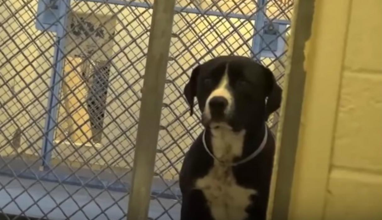 La tierna reacción de un perro al ser adoptado que encantó al mundo | VIDEO