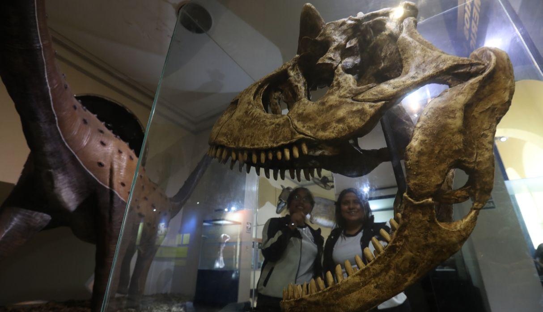 Museo de Historia Natural: cien años protegiendo el legado biológico del país