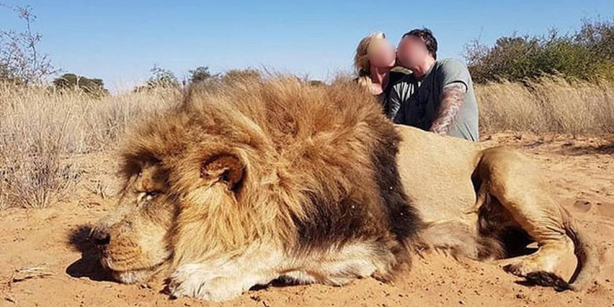 Facebook: indignación por pareja de cazadores que mató a león y celebró con un beso