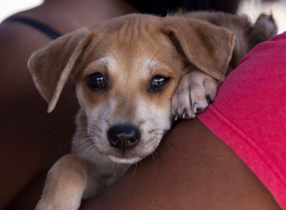 Municipalidad de Lima inicia este domingo campaña veterinaria