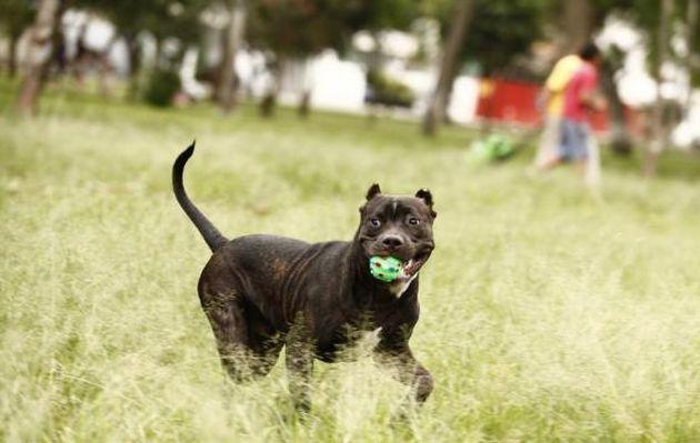 Organizan 'Gran feria animalista' para recaudar fondos y ayudar a mascotas en Jesús María