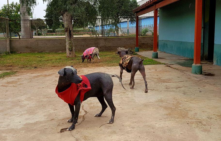 Rumi, Lucas y Ludovico: los perros peruanos del Parque de las Leyendas