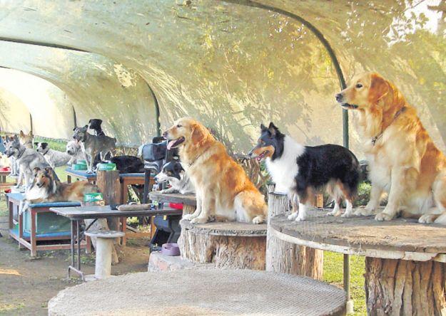 Una guardería para perros