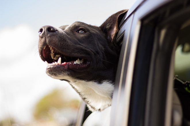 'Cómo hacer un road trip con tu mascota sin problemas', por Melissa Crovetto | The Wanderlust Chick
