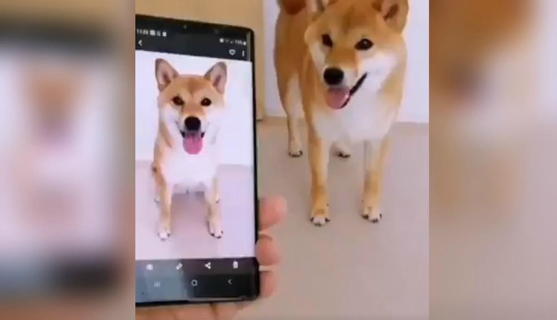 Perro ve su fotografía en un celular y sorprende a su dueño con curiosa reacción | VIDEO