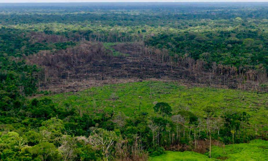 Día Internacional de los Bosques Tropicales: ecosistemas en máxima alerta