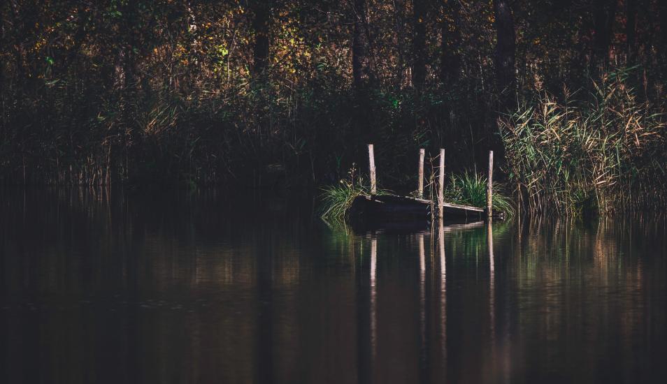 Pescador tuvo un aterrador cara a cara con criatura de las profundidades de un pantano