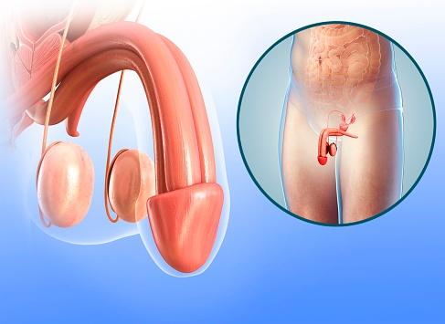 No solo es la testosterona. El pene necesita algo más para su correcta formación en el feto. (Getty)