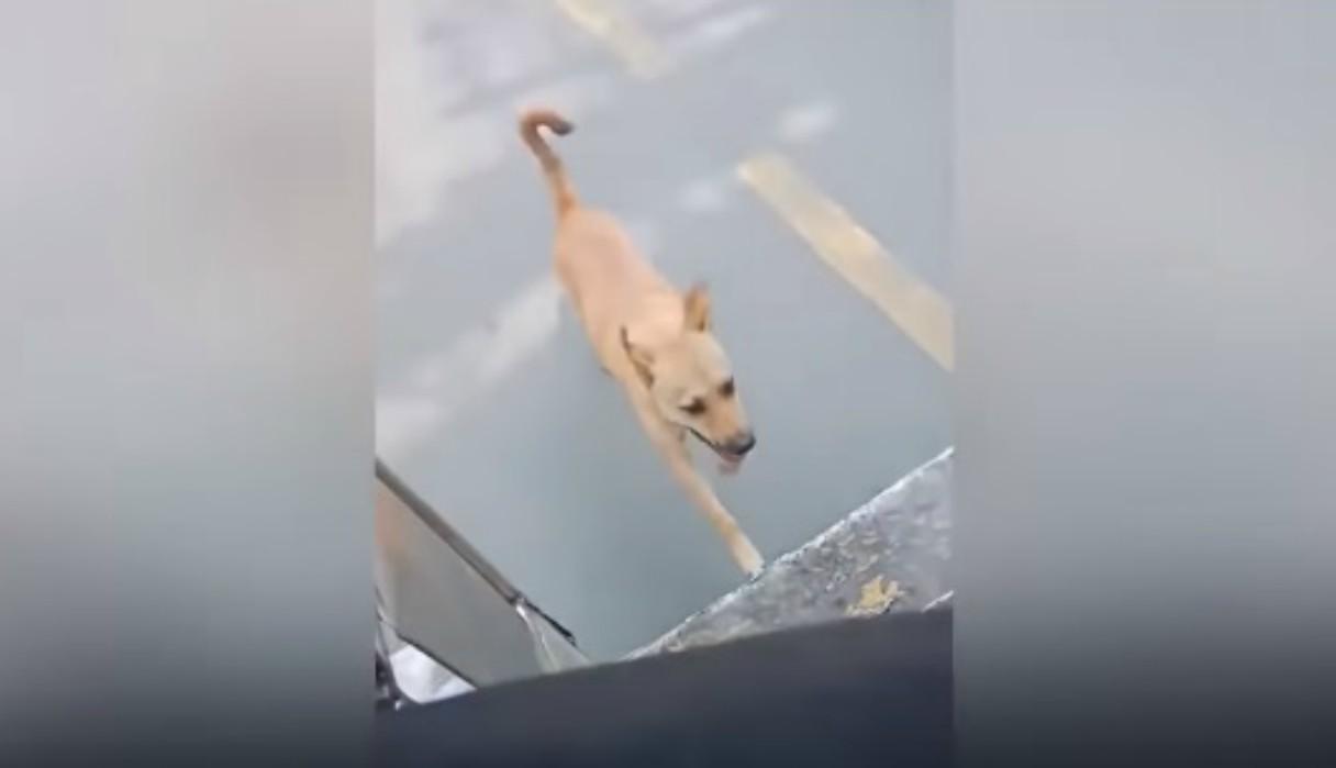 Chofer de bus adopta perro sin hogar que persiguió su vehículo durante varios minutos