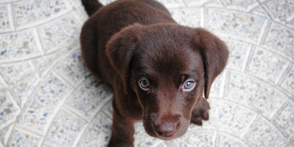Un perro en la oficina reduce el estrés y eleva la productividad de los empleados, según estudio