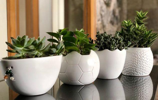Cuatro beneficios de tener una planta en casa