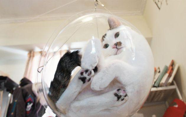 VIDEO: La camita de burbuja para gatos que busca financiamiento