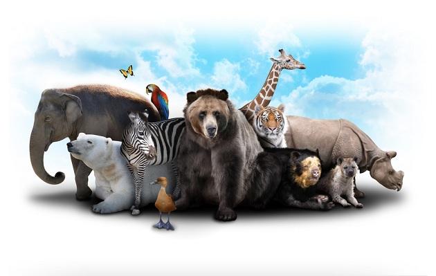 """Nat Geo Wild presenta especial por el """"Día del Animal"""""""