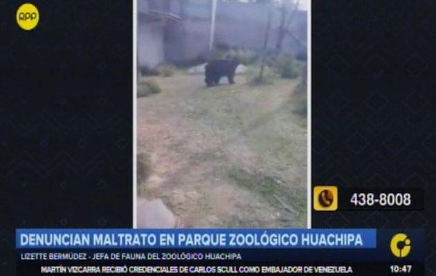 Zoológico de Huachipa niega maltrato animal: 'Es un problema conductual en los osos'