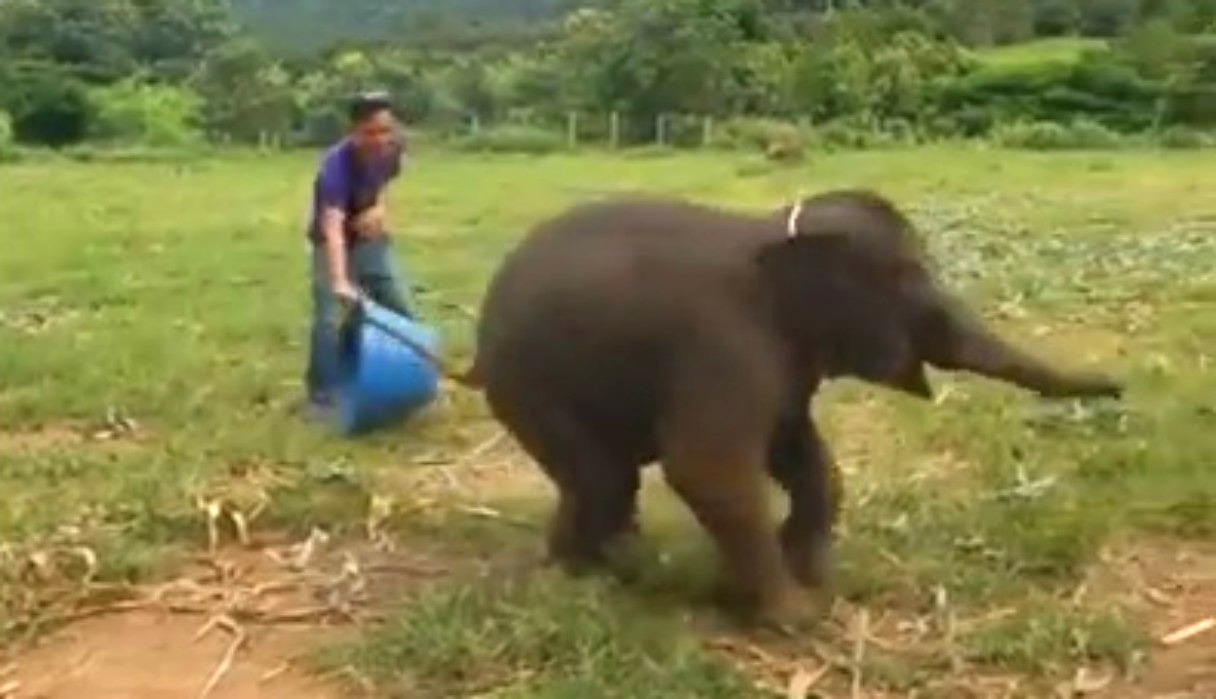 Graban el preciso instante en el que un elefante se ríe a carcajadas y dejan boquiabiertos a miles