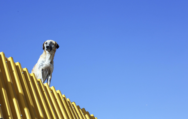 Irán quiere prohibir el paseo de perros en las calles de cualquier ciudad. (EFE)