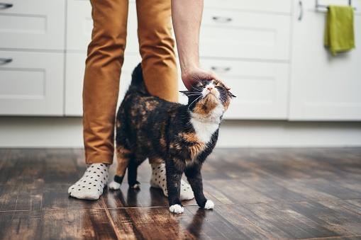 Los cuidados de mascotas en edad geriátrica.