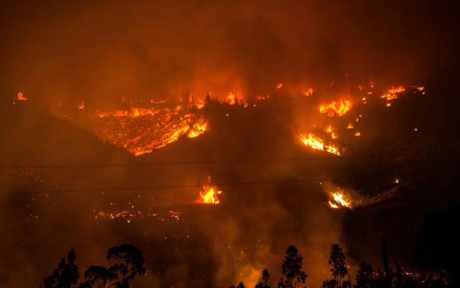 Incendios: la tragedia que consume la flora y fauna de Chile