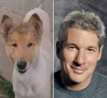 Ahora, vamos al tema medular. ¿Acaso no es idéntico el perrito a Richard Gere?