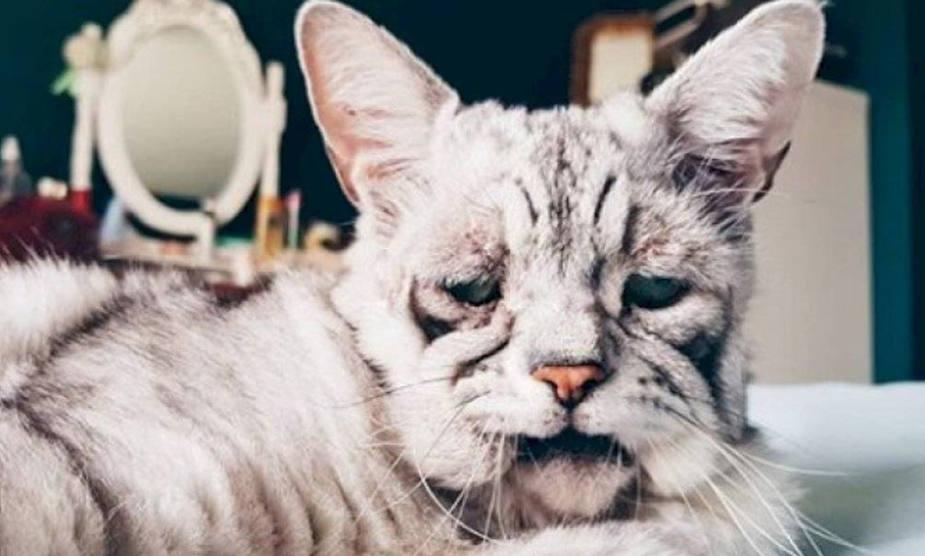 Extraña enfermedad convirtió a este adorable gatito en el 'más triste del mundo'