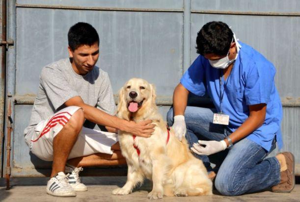 Lima: casi 5 mil mordeduras de animales se reportaron en centros de salud de 13 distritos