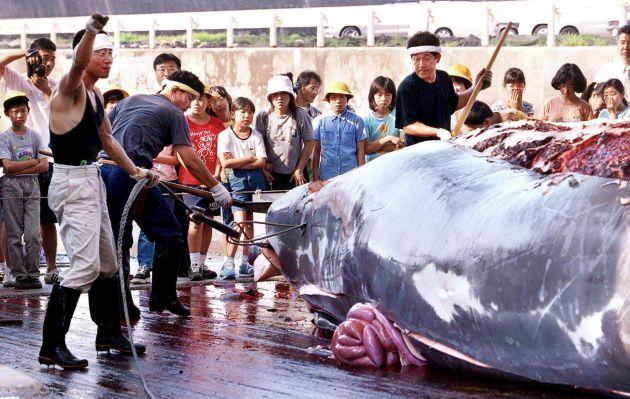 Ordenan a Japón cesar la caza de ballenas en el océano Antártico