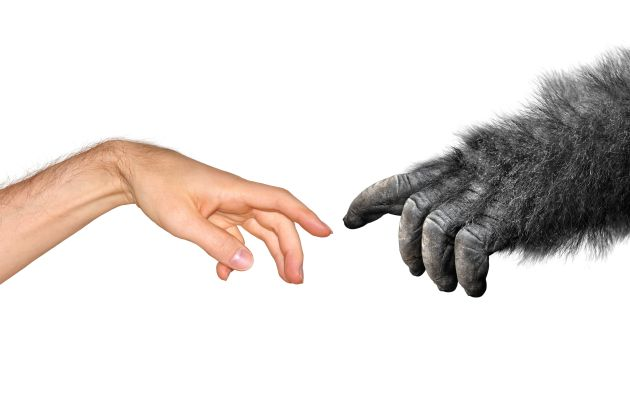Humanos y simios se separaron antes de lo que se pensaba... y no en África