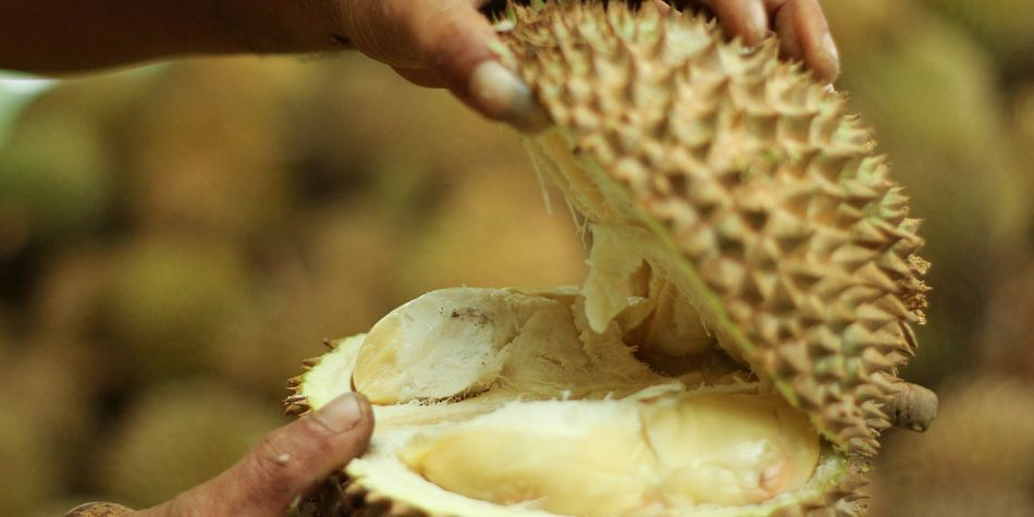El Durián: Todo sobre la fruta más apestosa del mundo