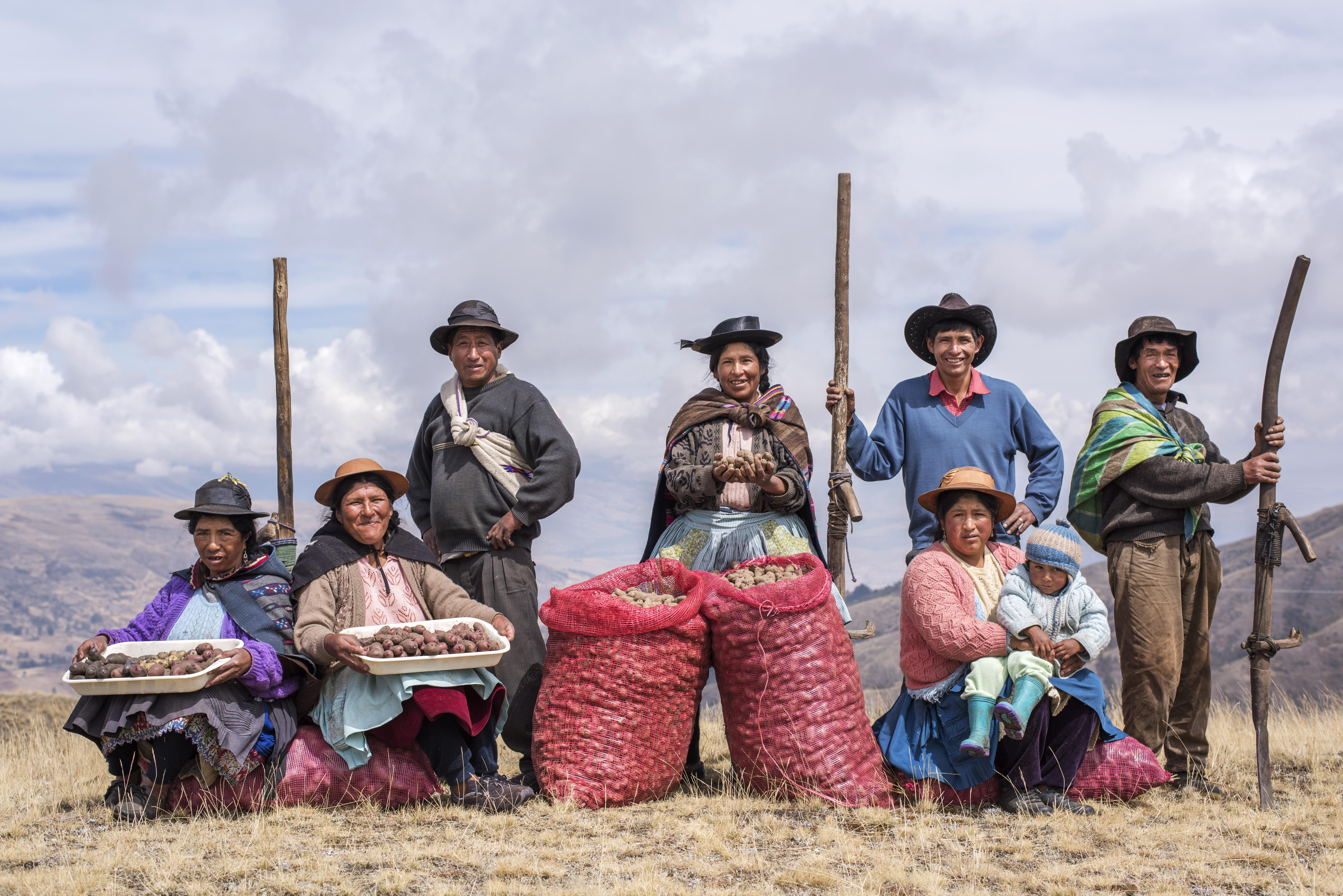 ¿Cómo se cosechó la mayor exportación de papas nativas en el Perú? | CRÓNICA