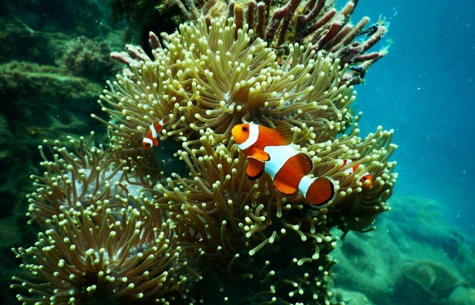 Día mundial de los océanos: amenazas y estrategias científicas para salvarlos