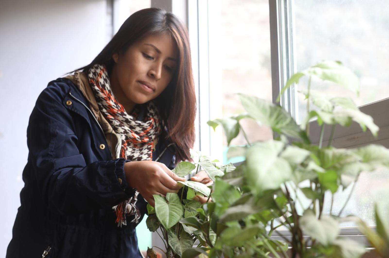 Protege a tus plantas del invierno con estos sencillos consejos