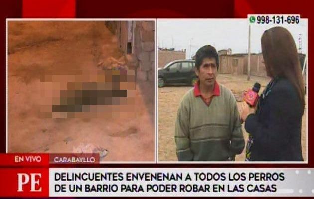 Carabayllo: ladrones envenenan a ocho perros para poder robar casas de la zona
