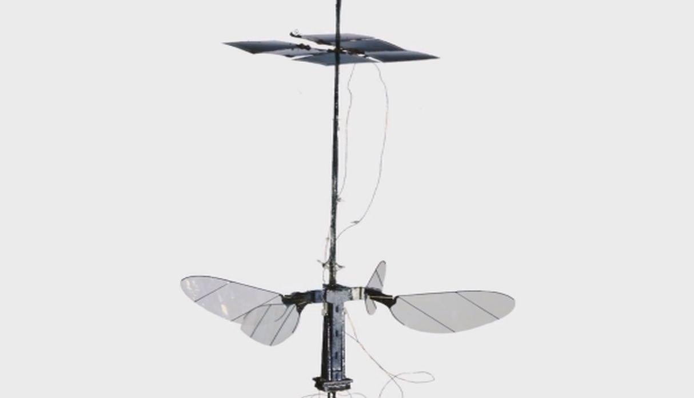 Robobee X-Wing, robot inspirado en un insecto, logra alzar vuelo solo con uso de la luz
