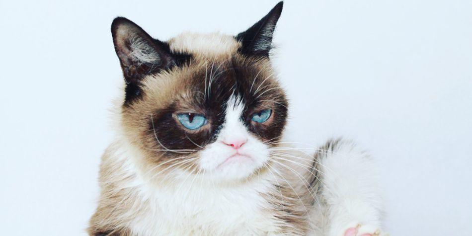"""Grumpy Cat: conoce cómo se hizo famosa la gata """"malhumorada"""" más querida de Internet"""