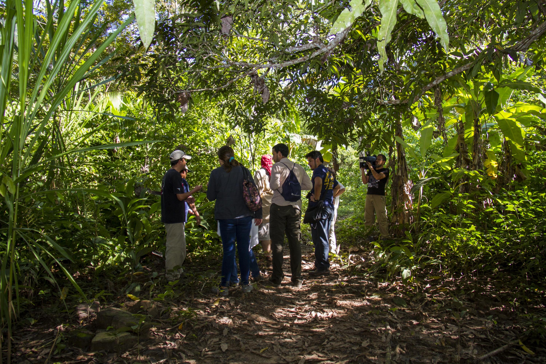 El Parque Nacional Cordillera Azul, uno de los pocos espacios de selva virgen en el Perú