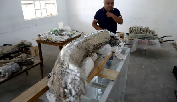 Héctor Aguilar Rosas, de la asociación civil Tepalcayotl, muestra los restos fósiles de un mamut. (Foto: EFE)