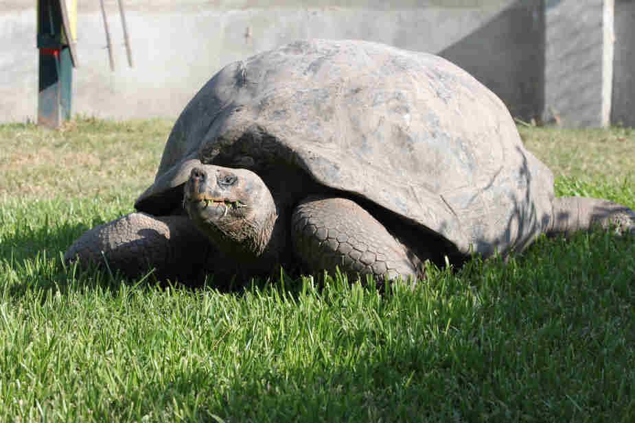 Día Mundial de las Tortugas se celebrará en el Parque de las Leyendas